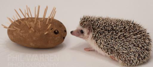 Pijamas Workshop: Hedgehog!